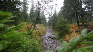 nasser trail von der Wolfswarte